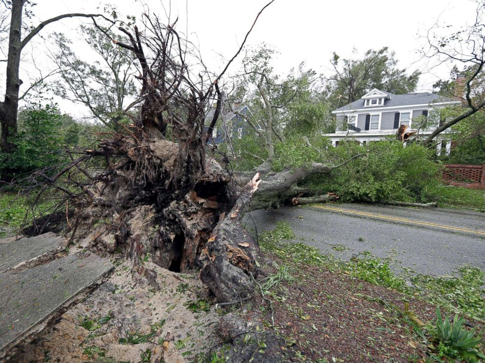 PHOTO: A tree uprooted by strong winds lies across a street in Wilmington, N.C., after Hurricane Florence made landfall, Sept. 14, 2018.