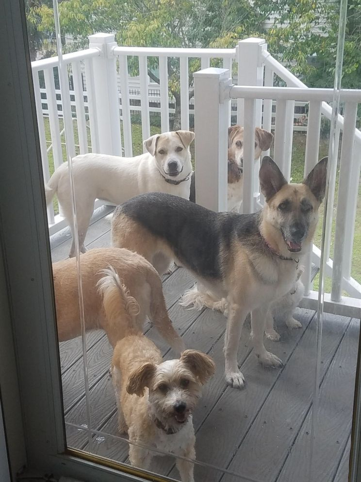 PHOTO: Pets are a major reason for many who are choosing not to evacuate ahead of Hurricane Florence. These are some of the animals staying with Joyce Boucino in North Myrtle Beach.