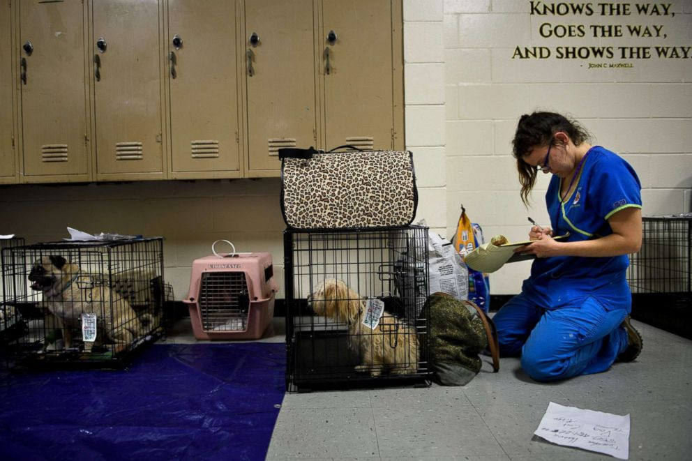 PHOTO: Pets are checked in, as people seek safety in a shelter as Hurricane Michael approaches, Oct. 10, 2018, in Panama City, Fla.