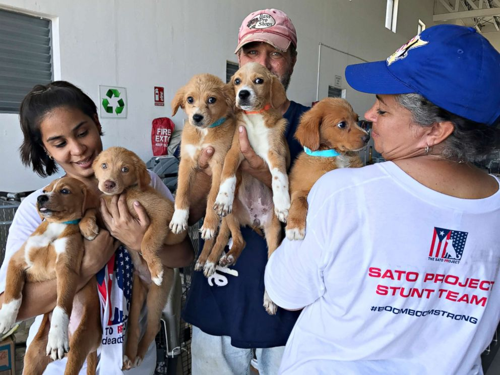 PHOTO: Volunteers with The Sato Project hold stray puppies rescued from Puerto Rico in the aftermath of Hurricane Maria.