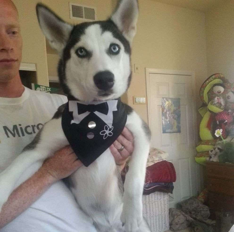 PHOTO: Kameroun Mares husky dog Semper Fidelis is seen here in an undated photo. The two were recently reunited after the dog was stolen and sold illegally, despite being microchipped and registered.