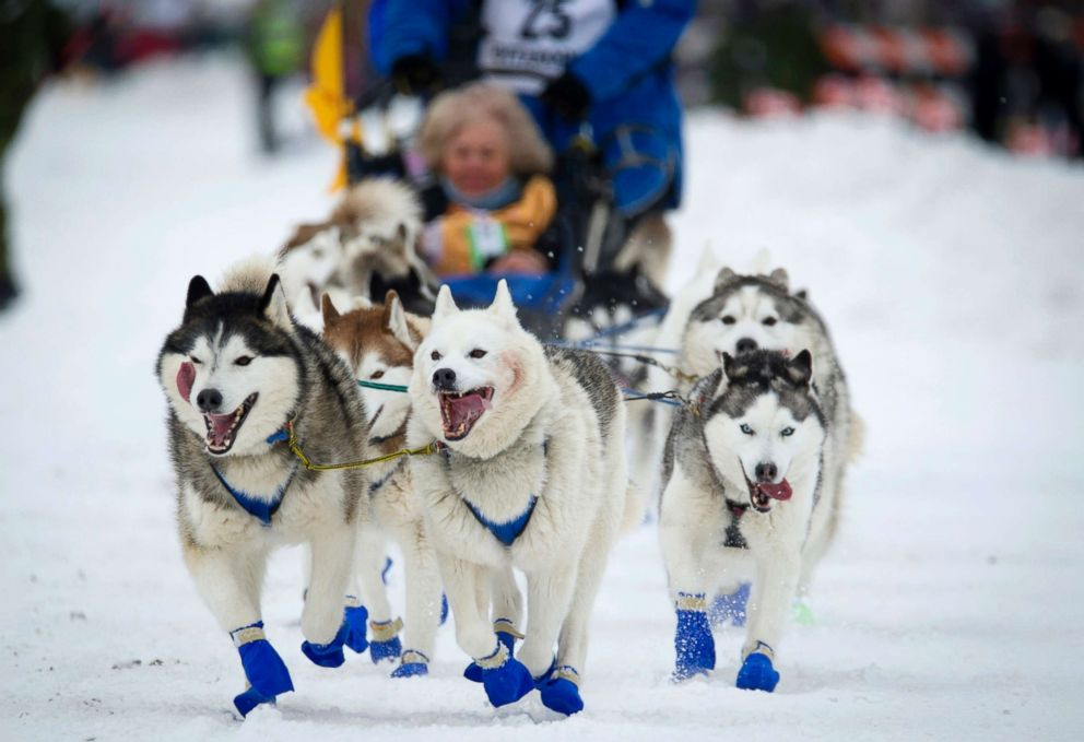 PHOTO: Alaska musher Tom Schonbergers lead dogs trot along Fourth Avenue during the ceremonial start of the Iditarod Trail Sled Dog Race in Anchorage, Alaska, March 3, 2018.