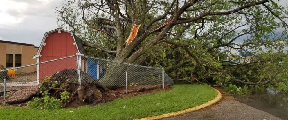 A large tree was uprooted by storms in Rockford, Iowa, on Saturday, June 10, 2018. Severe thunderstorms went through the area late in the afternoon.