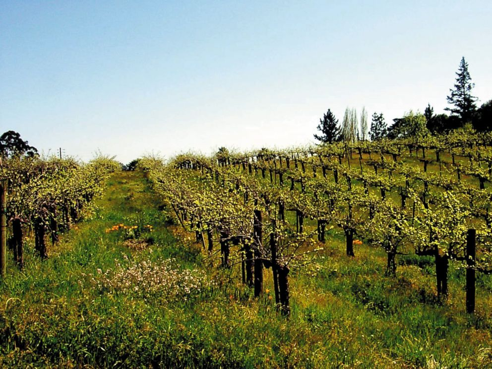 PHOTO: Iron Horse Vineyards stretches across Sonoma County, Calif, Apr. 20, 2014. California produces about 90 percent of Americas wines but the Sonoma and Monterey Valleys provide many other types of produce as well.