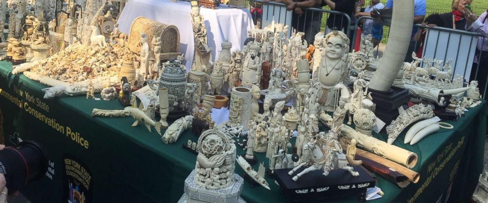 PHOTO: Table with ivory tusks, trinkets, statues, jewelry and other decorative items part of the Ivory Crush in Central Park, Aug. 3, 2017, in New York.