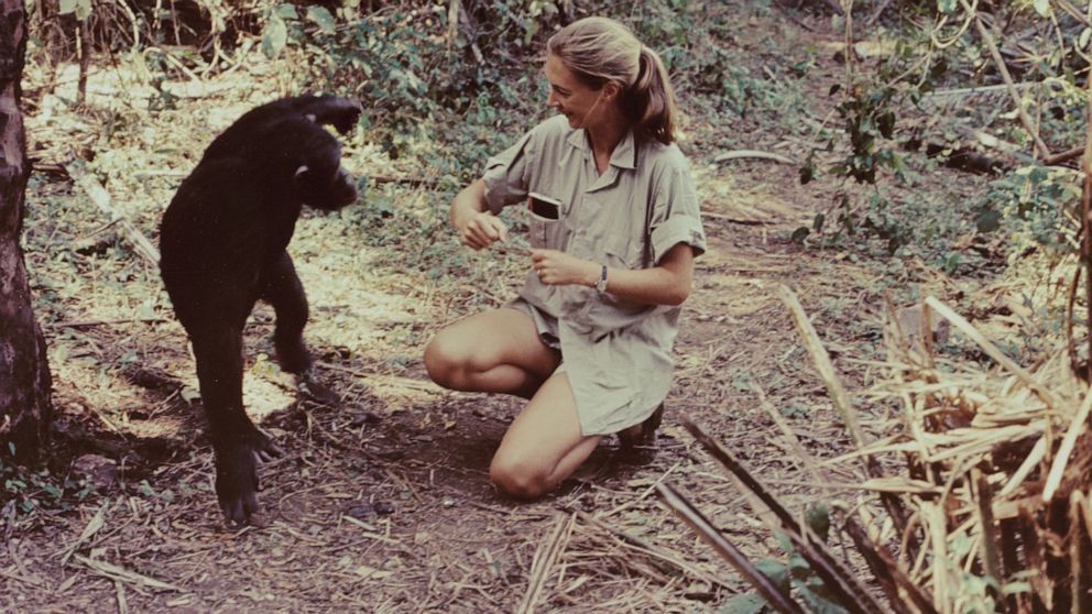 Jane Goodall on 60 years of studying chimpanzees in Africa: 'We're still learning new things'