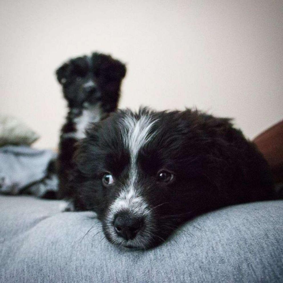 PHOTO: Jordana Kahana said he hoped his adventures, which he documents on social media, encourage others to adopt pets.