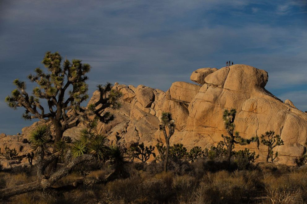 Despite Damage Joshua Tree National Park Stays Open And Will