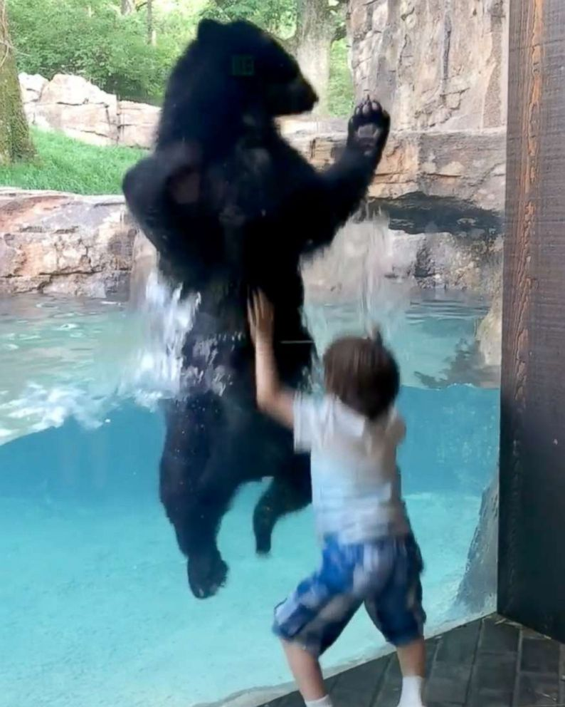 b847372d6fef Bear jumping with 5-year-old boy has the internet jumping for joy ...