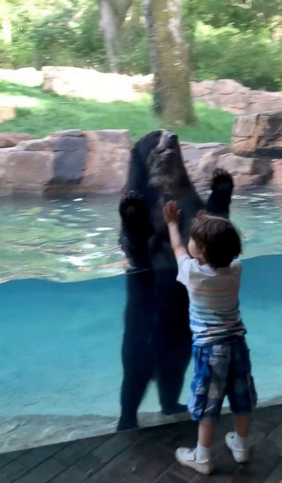 PHOTO: Curious bear and 5-year-old boy jump together at the Nashville Zoo.