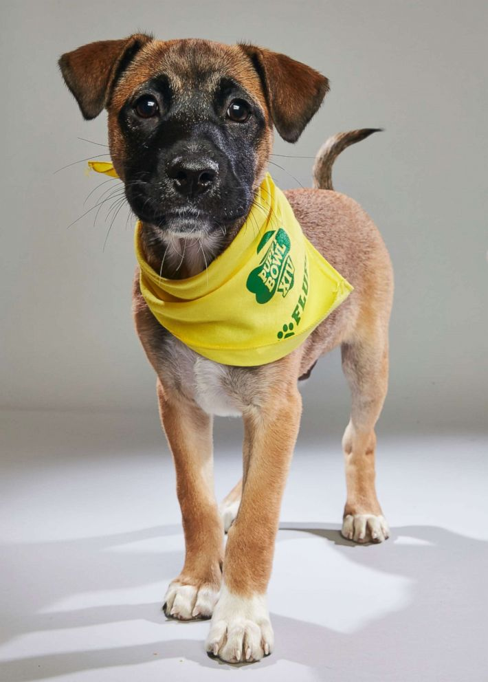 PHOTO: Kaleb Jr., who has been renamed Murphy by his adoptive mom, is among two puppies rescued from Puerto Rico after Hurricane Maria who will star in the 2018 Animal Planet Puppy Bowl.