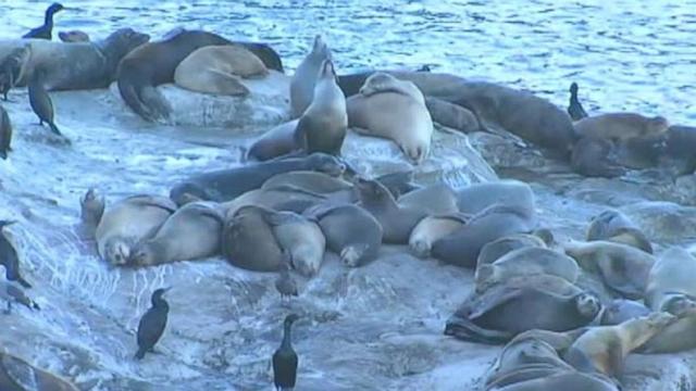 The Wandering Weekenders Visiting Sea Lions At La Jolla Cove