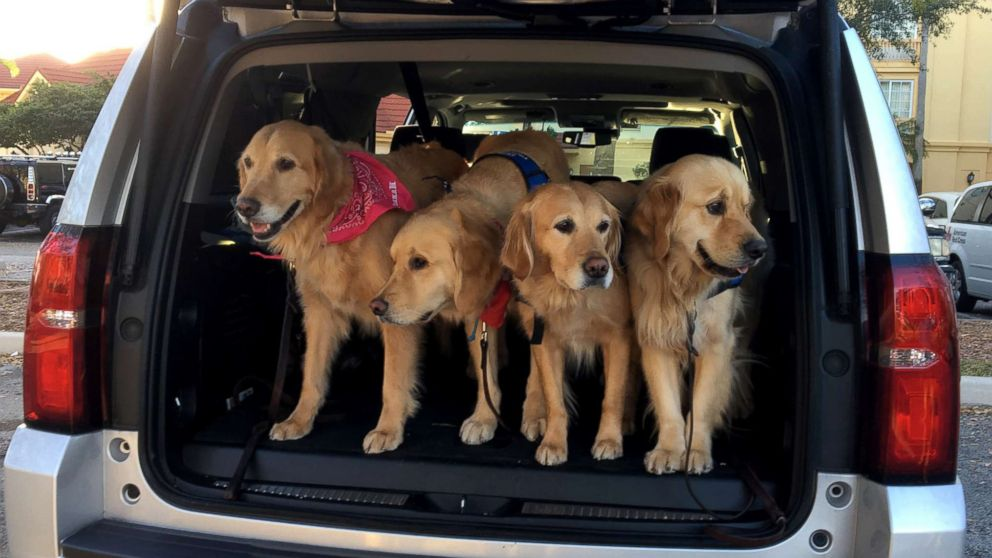 Comfort dogs descend on Florida community after deadly school shooting