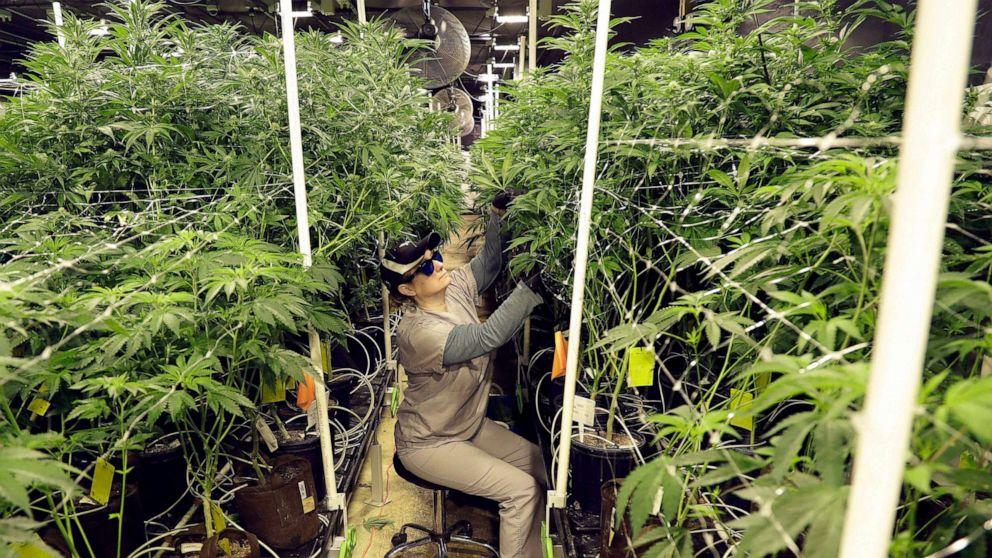 Marijuana legalization successes pave way for national conversation on drug laws: Experts