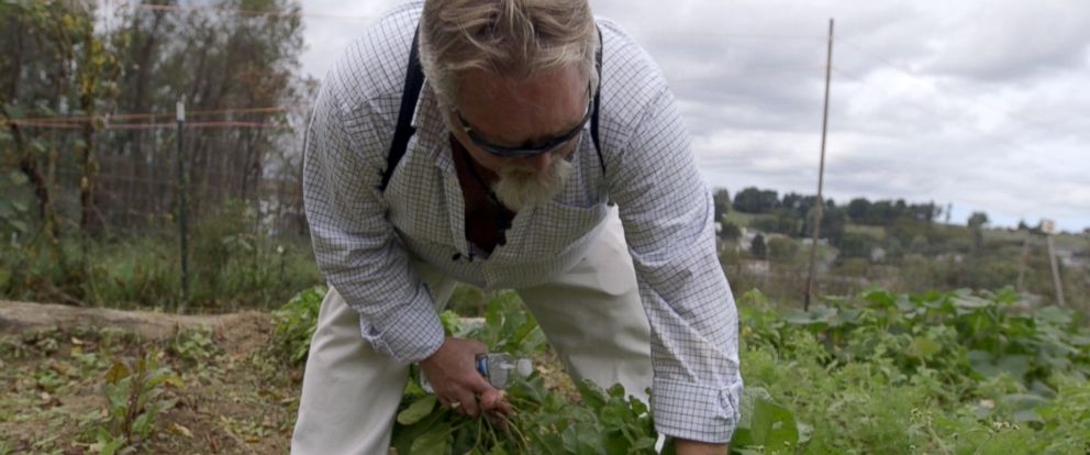 """PHOTO: Mark Cafego picks vegetables from a community garden in Morgantown, West Virginia. """"It gives me peace of mind,"""" he said of gardening while recovering from drug addiction."""