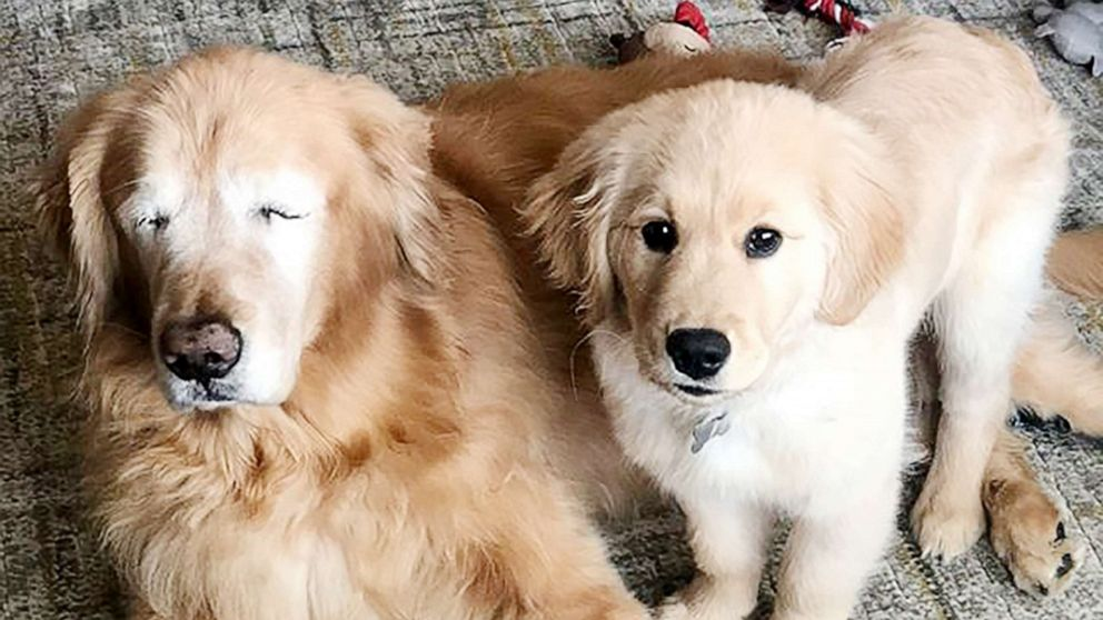 11-year-old blind dog finds companion — and guide — in puppy