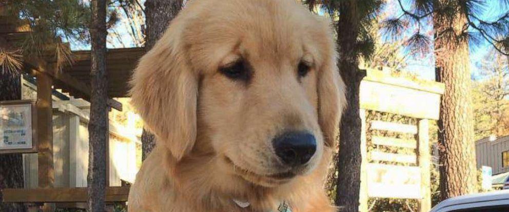 PHOTO: Maximus Mighty-Dog Mueller, II, has been mayor of Idyllwild, California, since July 2013.