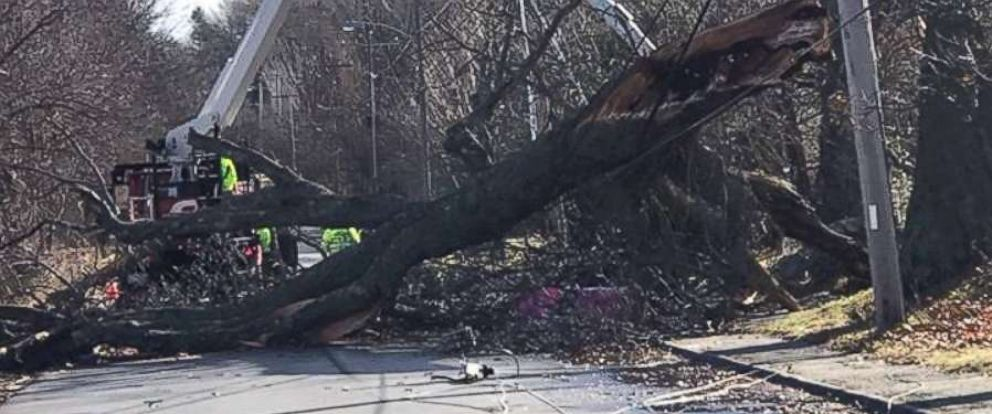 PHOTO: Gusty winds snapped a tree and knocked out power in Mendon, Mass., on Tuesday, Jan. 1, 2019.