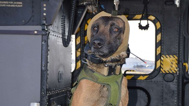 New technology may protect hero military working dogs from hearing loss