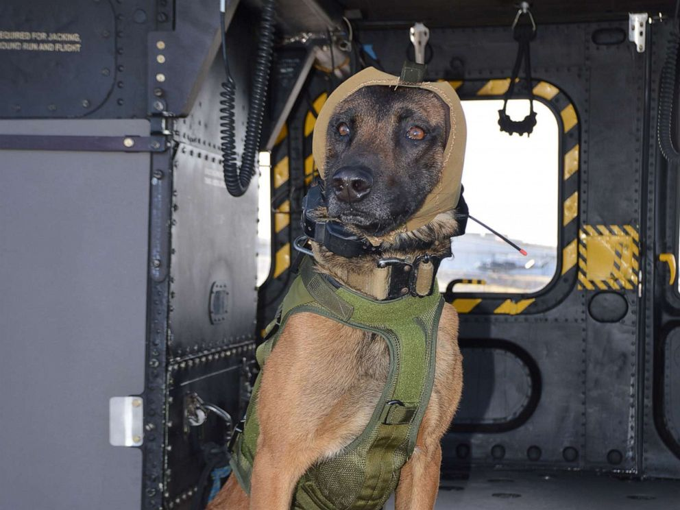 PHOTO: The Canine Auditory Protection System, known as CAPS, is designed to prevent short-term hearing loss in military working dogs, which can result from high-decibel noise in training, transport and operations.