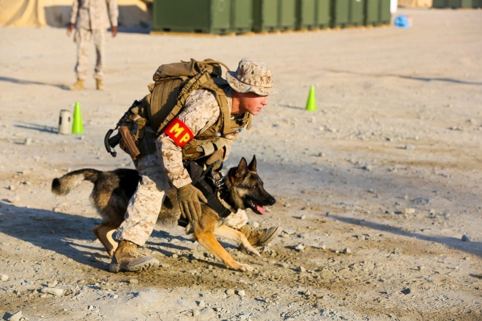On National K-9 Veterans Day, where are military dogs working around ...