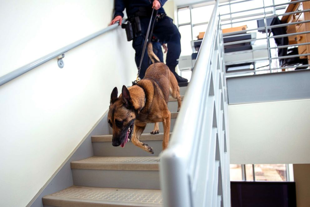 PHOTO Reisja A 7 Year Old Belgian Malinois From The Department Of Arlington