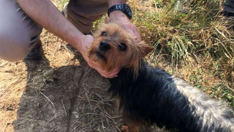 A dog stayed by the side of a missing little girl all night until authorities rescued them, according to the Missouri State Highway Patrol.