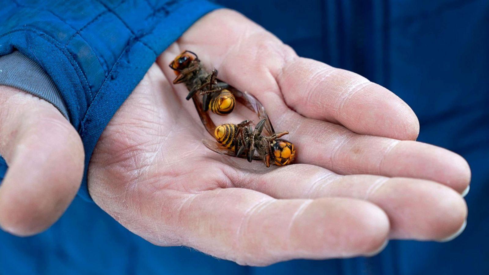 15 Biggest Hornets Nests