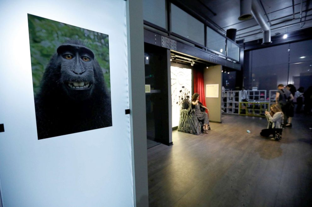 PHOTO: A print of a monkey selfie is on display during a VIP media preview ahead of the opening of the Museum of Selfies in Glendale, Calif., March 29, 2018.