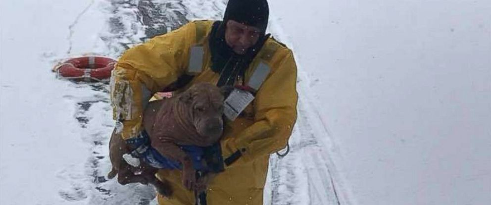 PHOTO: Firefighters from the Oaklyn Fire Department in New Jersey saved a dog who had fallen into a frozen creek behind a home.