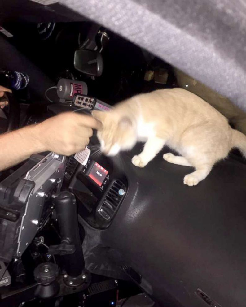 PHOTO: Oxford, Ohio police are looking for the owner of a kitten that jumped into a patrol car, Sept. 22, 2017.