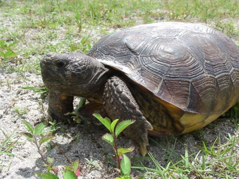 Image result for tortoises can't swim
