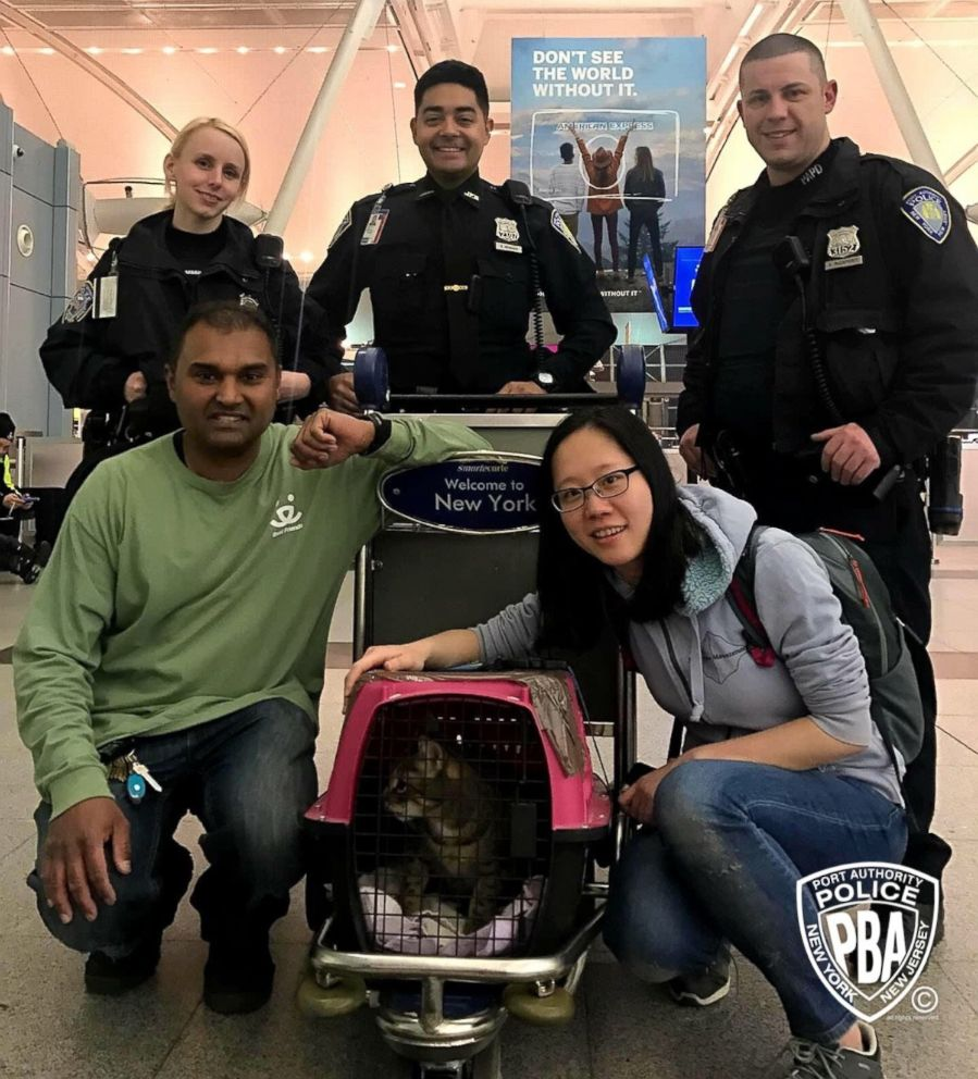 Lost Cat at JFK Airport Found
