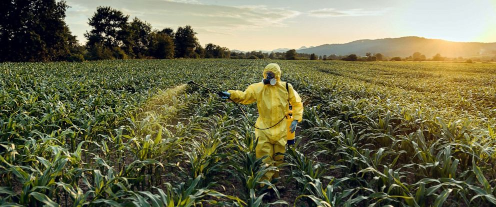 PHOTO: A worker sprays pesticides on a crop in this stock photo.