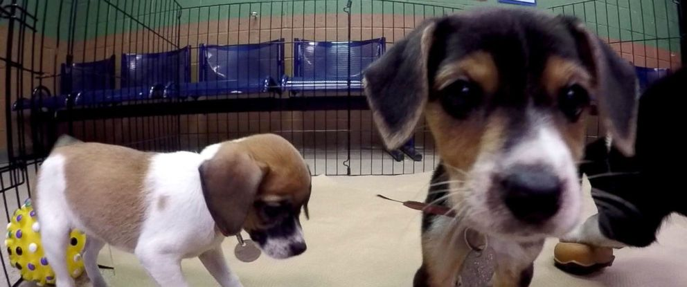 PHOTO: The charity arm of Zappos, the online shopping site, has partnered with 90 animal shelters across the U.S. to find homes for 25,000 cats and dogs. Its called Home for the Pawlidayz.
