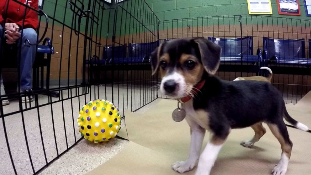 Free Adoptions Are Offered At 90 Shelters Across Us This Thanksgiving Weekend Abc News