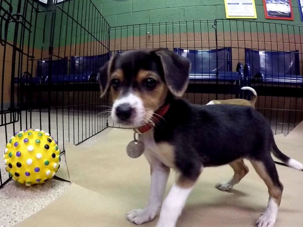 Free adoptions are offered at 90 shelters across US this