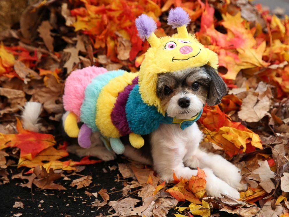Best Target Pet Halloween Costumes 2018 | POPSUGAR Family |Pet Halloween Coustumes