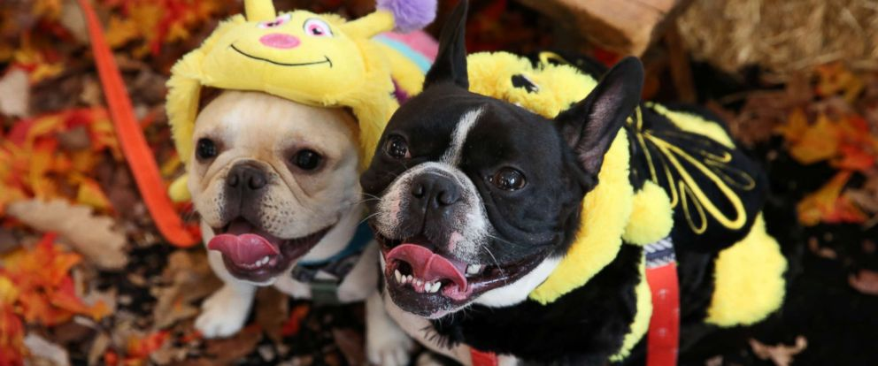 photo dogs model some of this years most popular pet halloween costumes during a petsmart