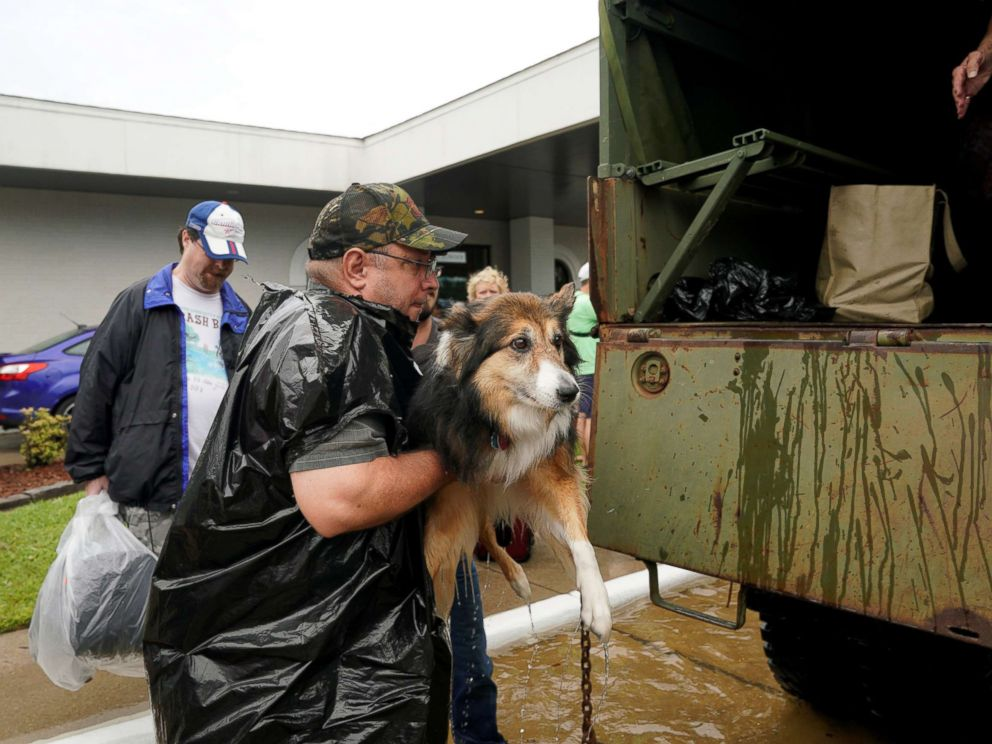 Stranded Pets Rescued Amid Hurricane Harvey Flooding In