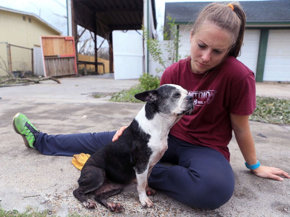 PHOTO: Jessica Dziuk found this dog in a neighborhood near Highway 35 and Market Street in Rockport two days after Hurricane Harvey devastated the Coastal city, Aug. 27, 2017, in Rockport, Tx.