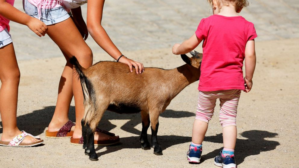 E. coli exposure: How to stay safe and healthy at your next visit to the petting zoo