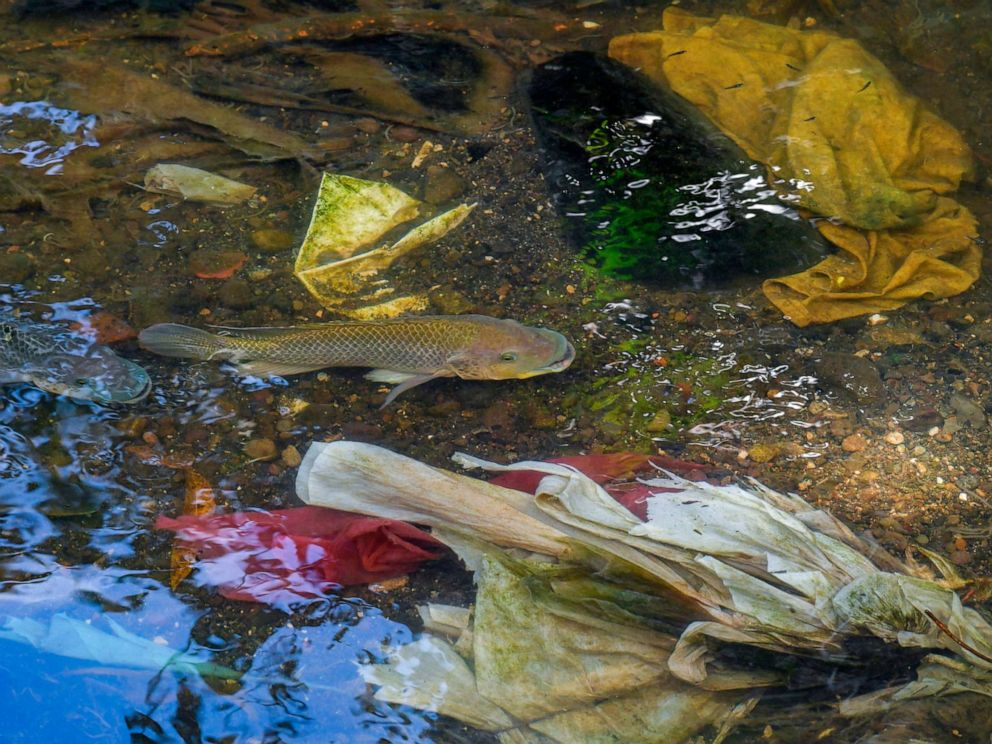 PHOTO: Fish swim among plastic waste at the Matias Hernandez River in Costa del Este, Panama City, Sept. 23, 2019.
