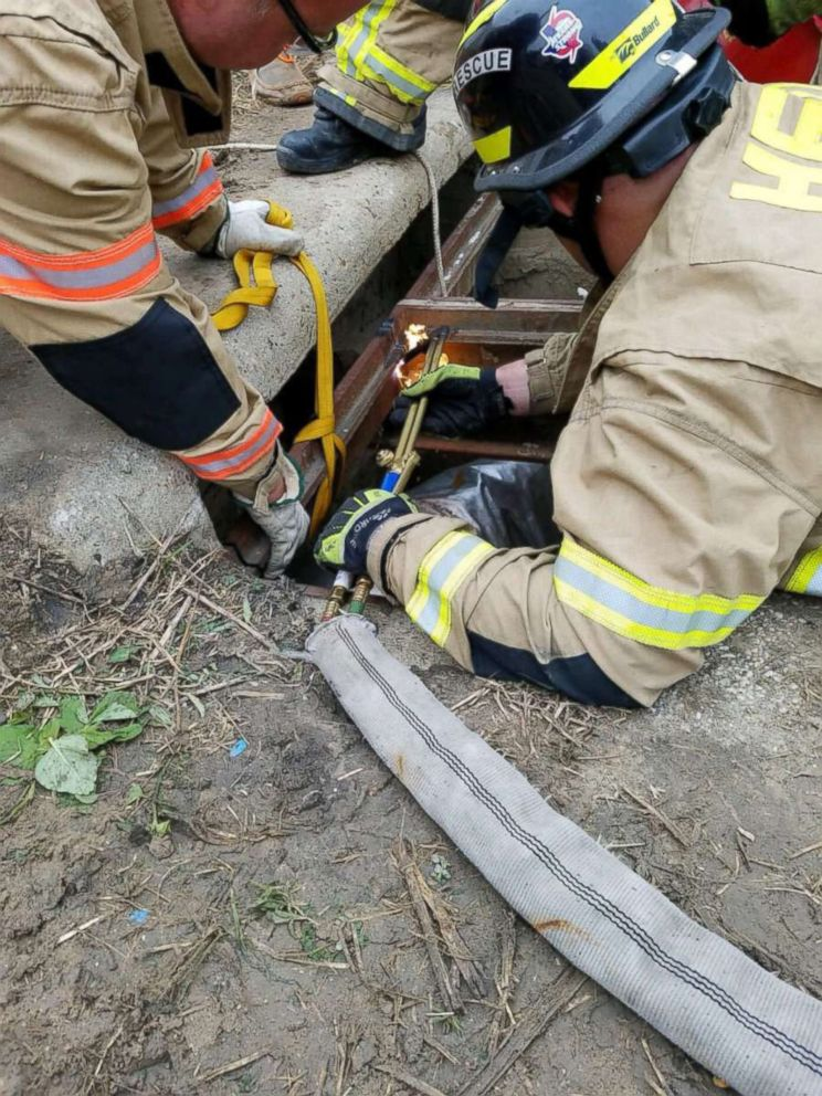 PHOTO: Houston firefighters rescue a pony in Houston, Oct. 17, 2018. BARC shelter is currently examining the animal.