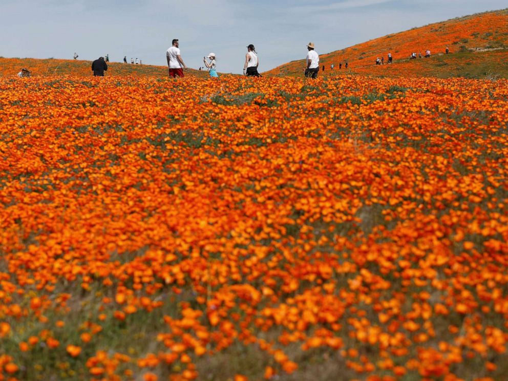 PHOTO: Visitors walk through the Antelope Valley California Poppy Reserve in Lancaster, California, March 26, 2019.