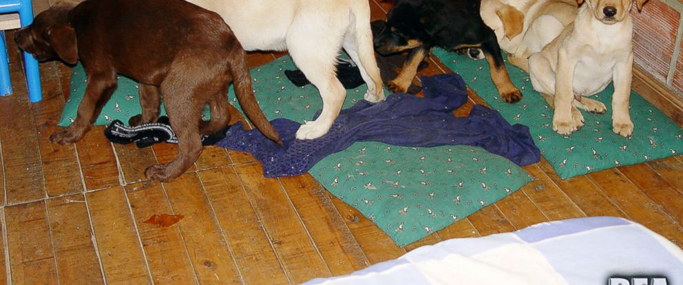 PHOTO: Dogs that were recovered from the clinic in 2006 are pictured in this undated photo.