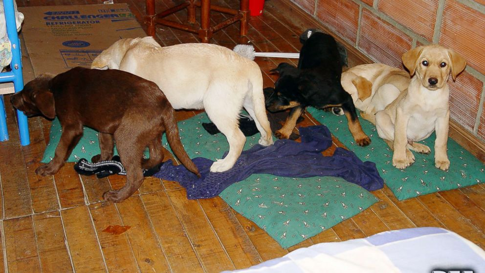 Veterinarian who smuggled heroin through puppies' bellies sentenced to 6 years thumbnail