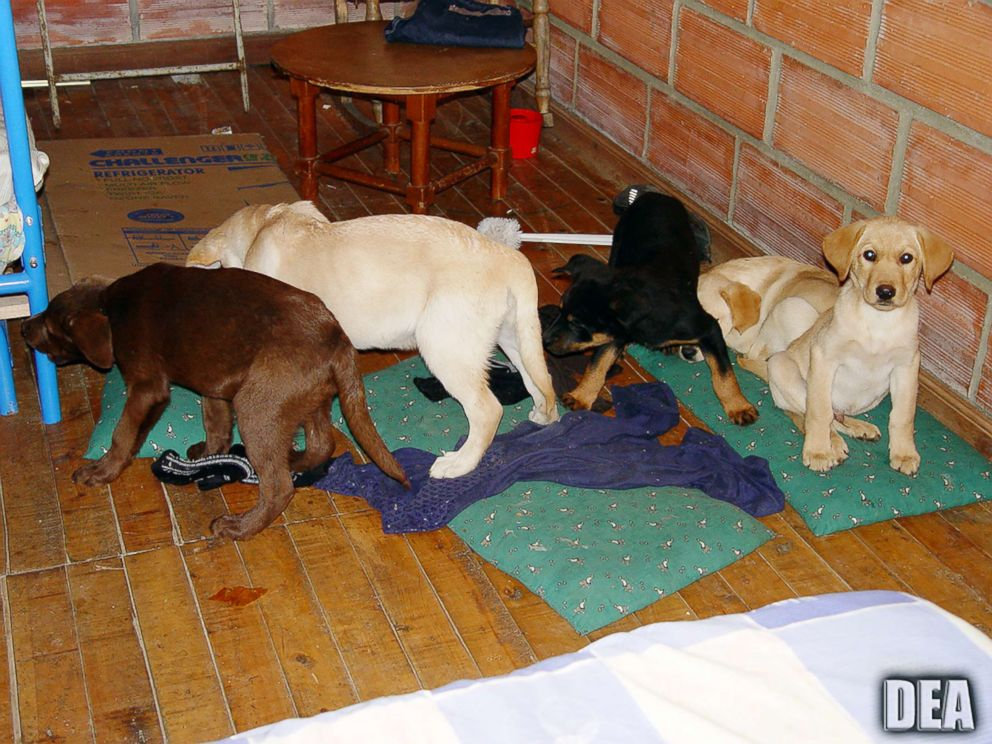 Colombian vet accused of sewing heroin into imported pups' stomachs