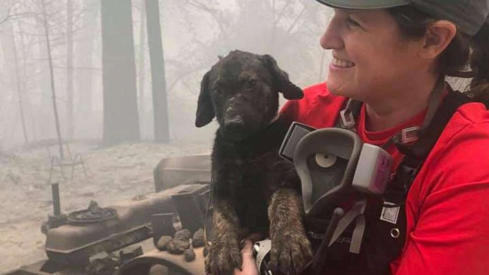 Adorable puppy, kitten with burnt paws rescued from wildfire rubble in Northern California