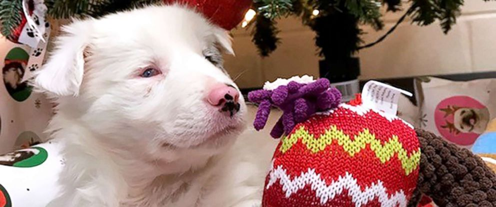 PHOTO: A puppy named Chapel is pictured at the Scott County Animal Shelter in Georgetown, Ky., Dec. 2018.